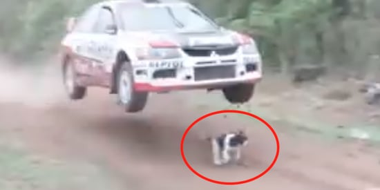 Airborne Rally Car Misses Hitting World's Luckiest Dog By Just Inches