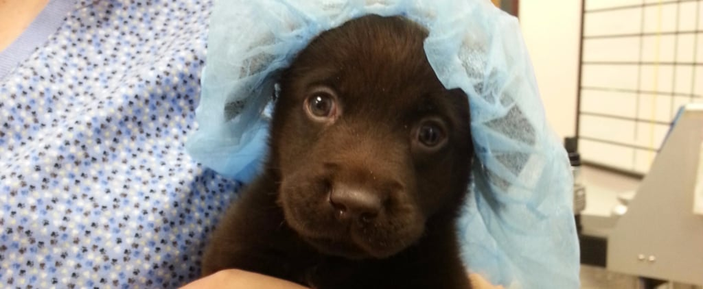 Puppy With Birth Defect Escapes Euthanasia and Beats All Odds