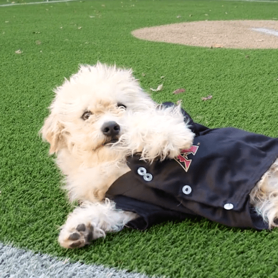 Dog Adoption at Diamondbacks' Stadium | Video