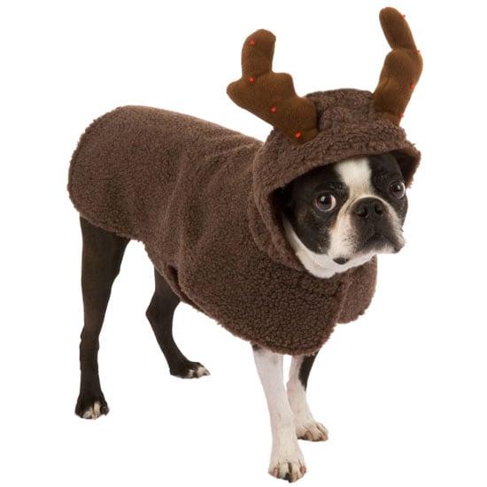 It's a Reindeer?! Nope, a Rein-Dog!
