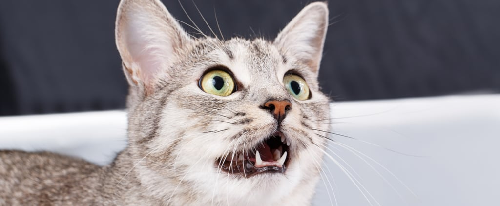 Simple Tips For Keeping an Eye on Your Cat's Dental Health