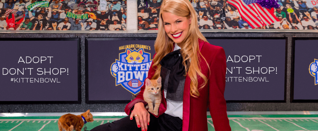 Beth Stern Says Hosting the Kitten Bowl Is the Greatest Job in the World