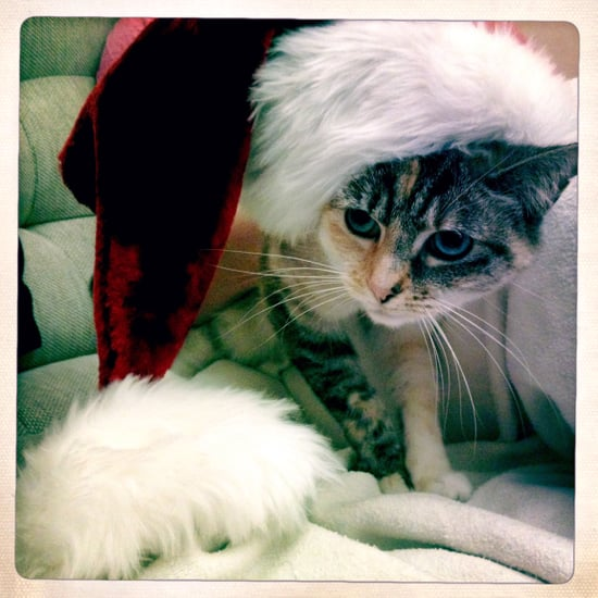 Holiday Pet Pictures