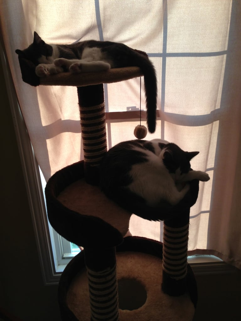 Software Engineer Dan Rogers snapped a pic of his cats, Oscar and Minou, doing what they do best.