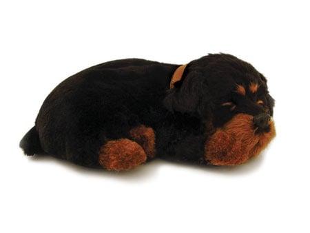 Perfect Petzzz: Rottweiler