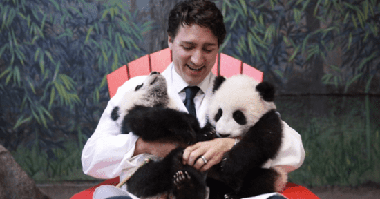 Justin Trudeau Greets Canada's Adorable Baby Pandas