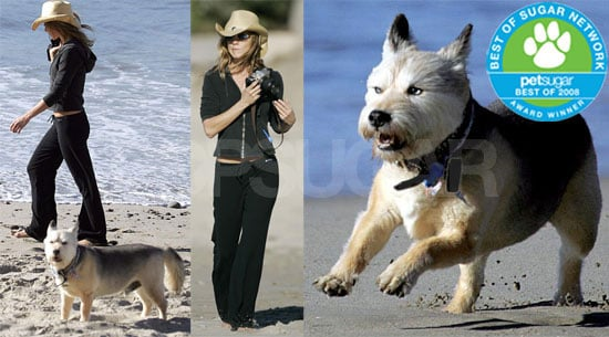 The Results Are In: Celebrity Pet of the Year!