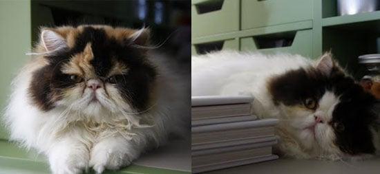 New Kittens Alert! Empress Tang and Princess Peony