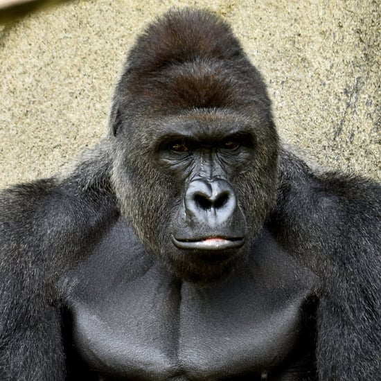 Criticism of Parents of Boy Who Fell Into Gorilla Exhibit