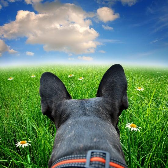 Dog Hopping Through Field
