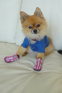 Pet Pic of the Day: Shoe-in
