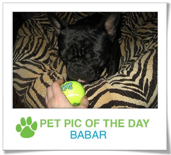 Pet Pics on PetSugar 2009-04-10 09:00:34