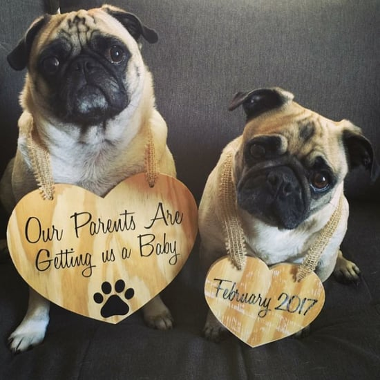 Pregnancy Announcement With Pets Ideas