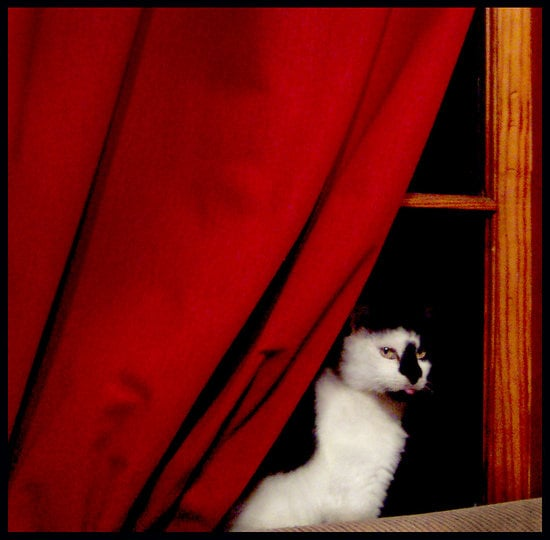 Pets in the House:  BlueCanary's Windowgazing Kitty