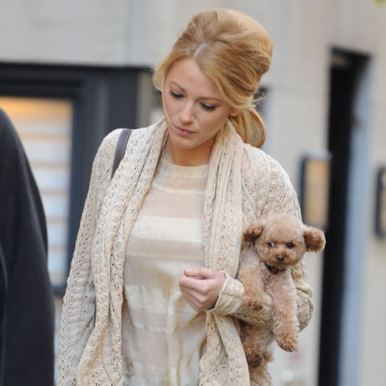 Blake Lively With Her Dog on the Gossip Girl Set Pictures