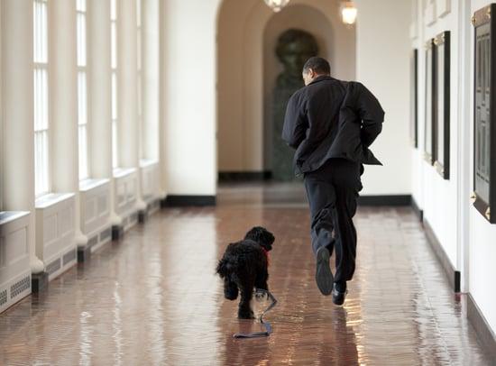 White House Pets Trivia Quiz