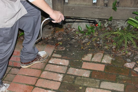 The technician also applied beneficial nematodes to the areas around the house to control outdoor fleas.