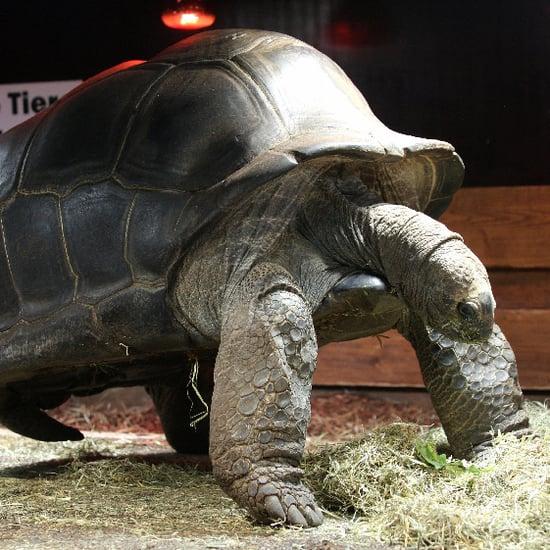 Creature Features: Turtles, Terrapins, or Tortoises?