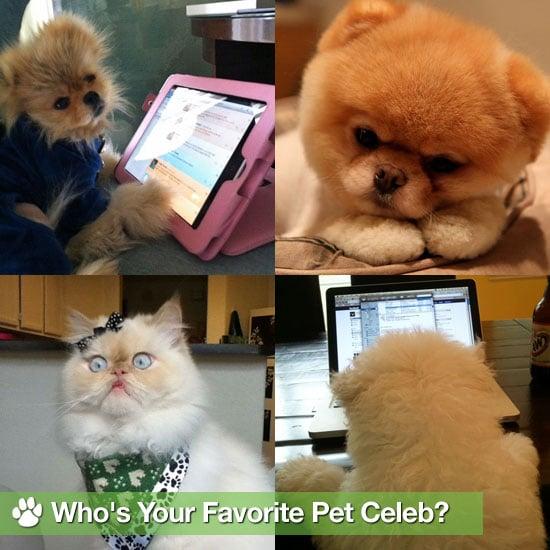 Pet Celebrities Giggy, Maru, Luna, Boo, and Beast