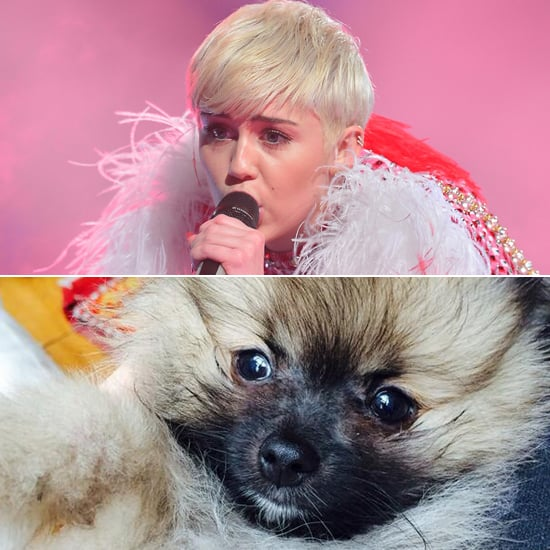 Miley Cyrus Gets a New Puppy After Floyd's Death | Picture