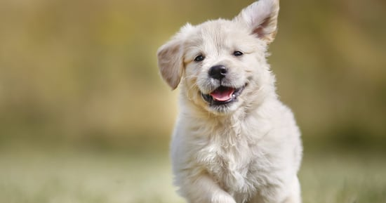 Lawmakers Paws To Celebrate National Puppy Day