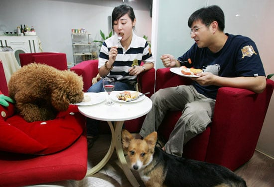 Share a Plate With Pet?