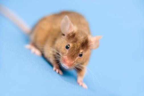 More Animal Testing Due to Increasing Botox Popularity