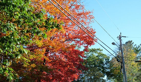 Free Fall Activity: Take In the Colors