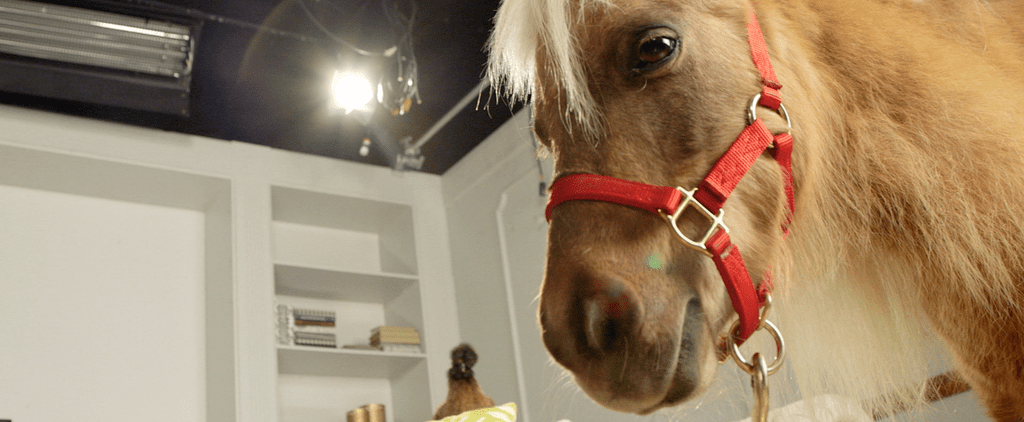 A Surprise Minihorse Proves Size Doesn't Always Matter