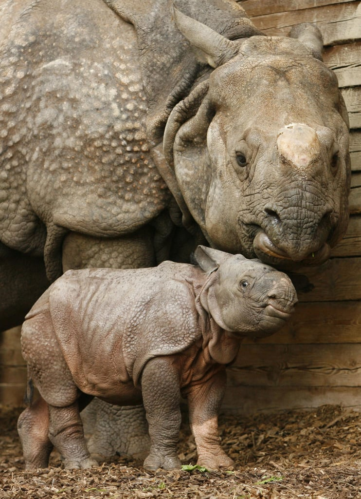 Rhino Speak