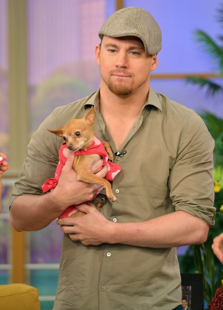 Channing Tatum got to cuddle an adorable dog during a TV appearance in Miami to promote White House Down in June.