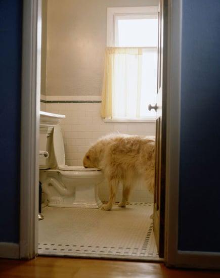 Pet-Proofing Your Home: Bathroom