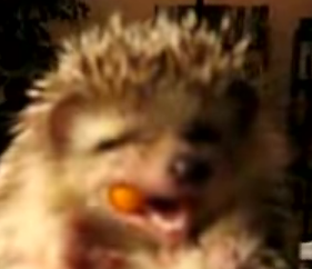 Hedgehog Nibbles on a Carrot