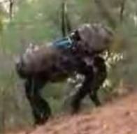 The Boston Dynamics Big Dog