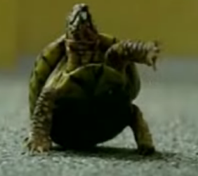 Turtle Trained to Perform Dog Tricks