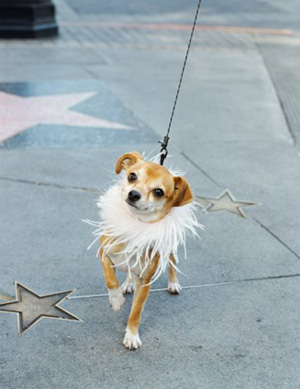 Oscar Gift Bag Goodies For Celeb Pets