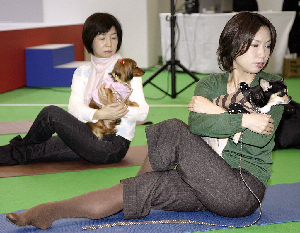 Workin' It Out at the New Year Dog Party Dog Yoga Event