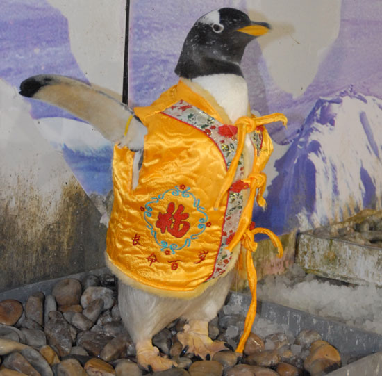 Globetrotters: Penguins Celebrate Chinese New Year, Too!