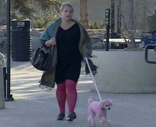 What's Your Take: Cici the Pink Poodle vs. Boulder City Code?