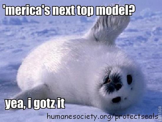 Sillify Some Adoro Seals With LOLspeak!