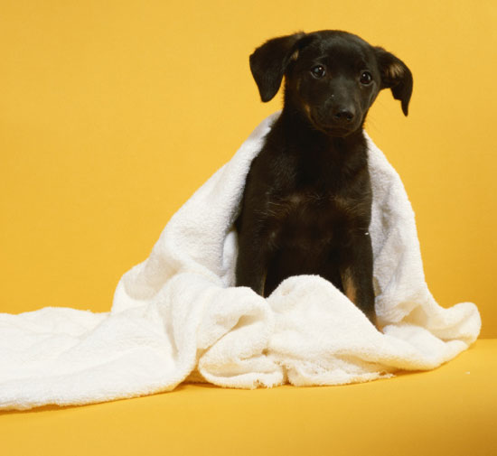 Give Back: Empty Your Linen Closet For Pets' Sake!