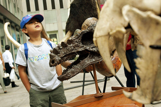 Fifth Grader Fixes the Smithsonian