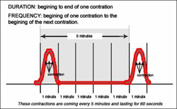 Why Didn't Anybody Tell Me: Contractions