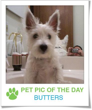 Pet Pics on PetSugar 2009-01-08 09:30:16