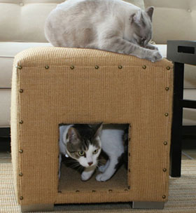 Sugar Shout Out: Win a Cat Scratch Cube!