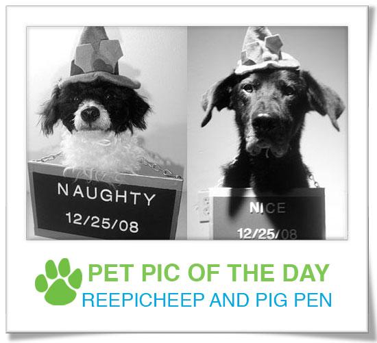 Pet Pics on PetSugar 2008-12-16 09:30:24