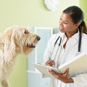 Choosing Your Pet's Veterinarian