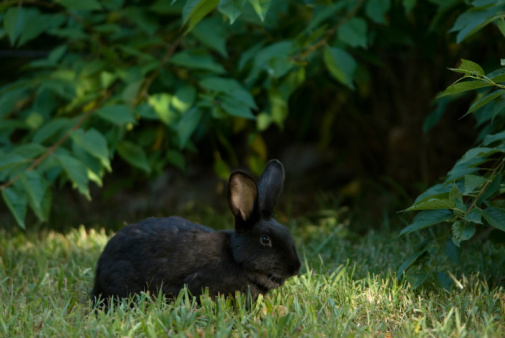 Rabbit Saves Family from House Fire