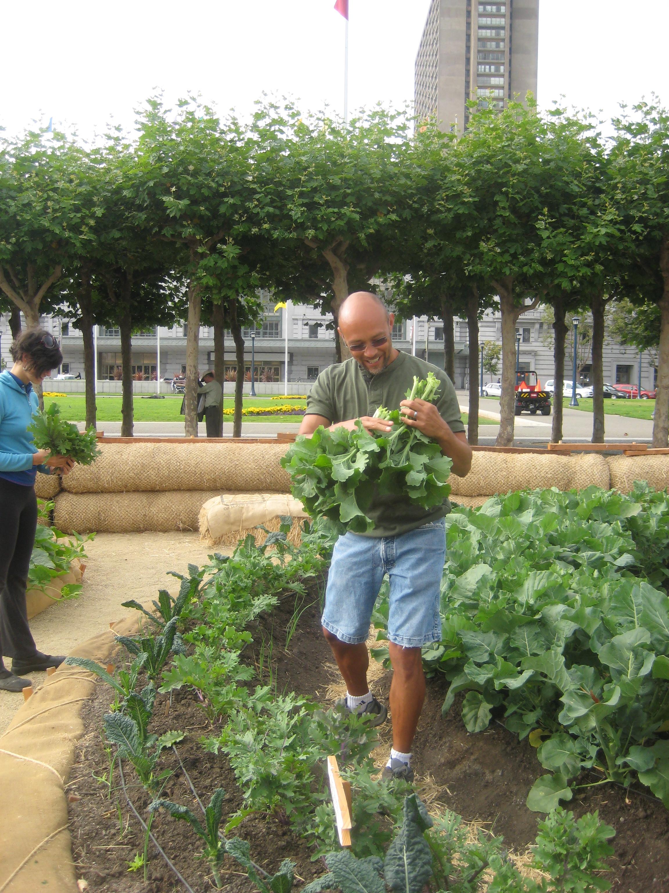 A volunteer works on the harvest.