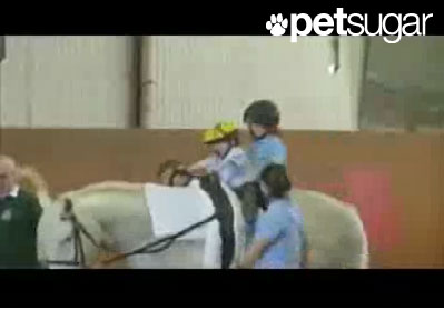 Horse Hero Helps Disease-Stricken Boy